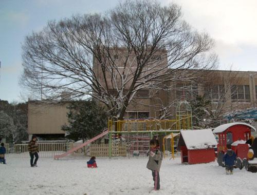白鳥幼稚園の冬のけやき