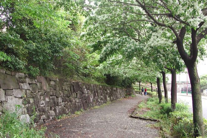 白鳥庭園沿いのヒトツバタゴの並木道